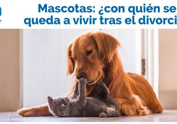 Mascotas en un divorcio ¿Con quién se quedan?